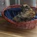 Sunshine in a basket