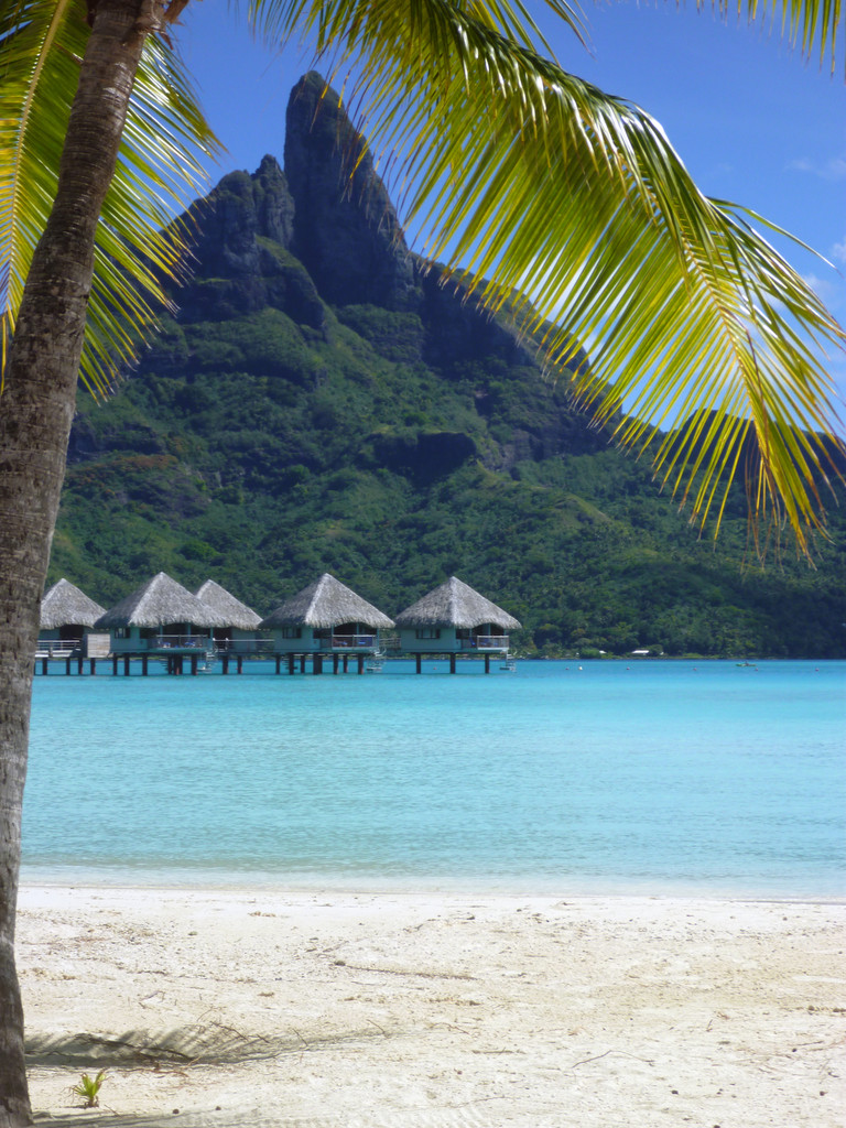Overwater bungalows, palm tree, and Mount Otemanu | Le ...