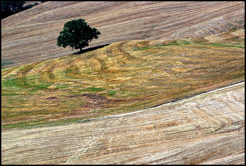 La quercia solitaria  -  The solitary oak | by enzo rettori