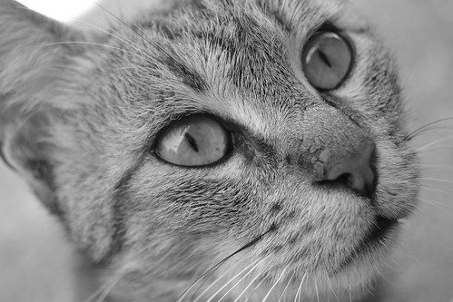 Through the eyes of a cat. | by gCere_photography