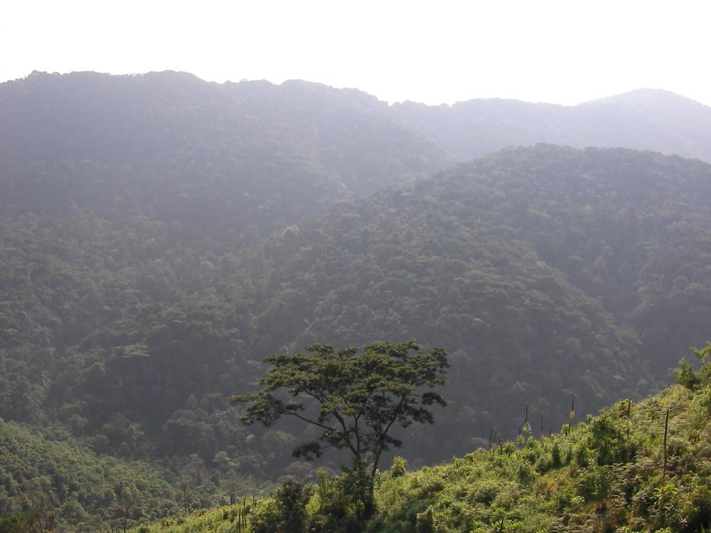 Bwindi (Uganda)