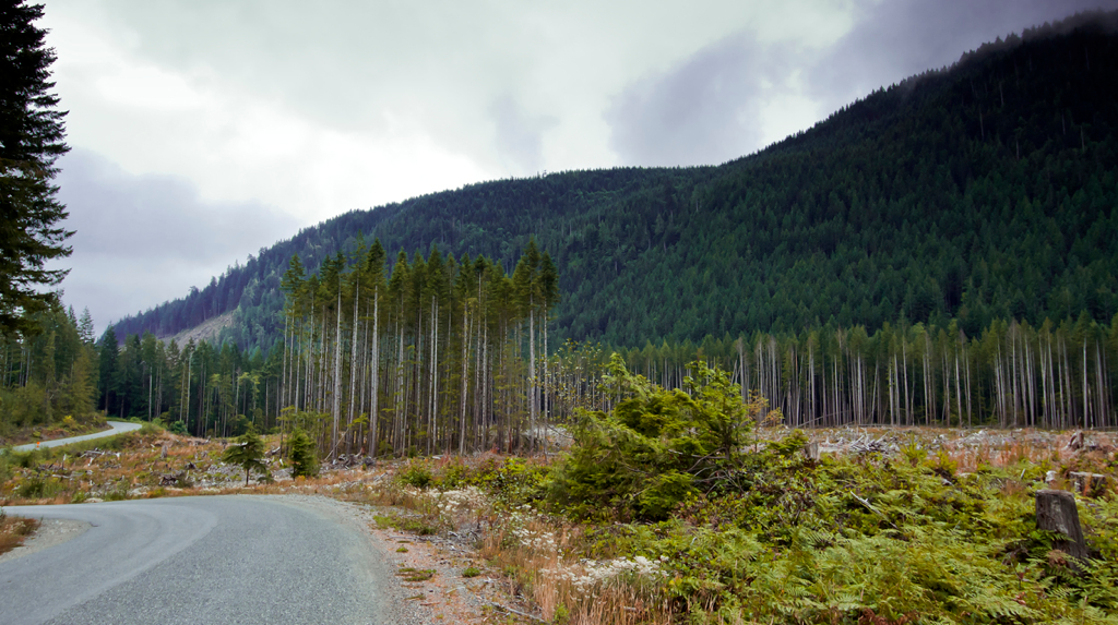 Vancouver Island Clear Cutting