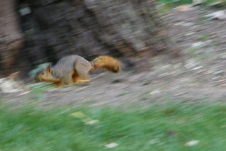 83/365/1178 (September 2, 2011) – Squirrels at the University of Michigan | by cseeman