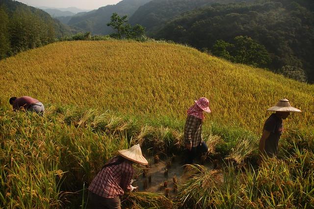 人禾基金會陪伴貢寮農民里山倡議的經驗,近日刊登於IPSI網站。圖片來源:林務局