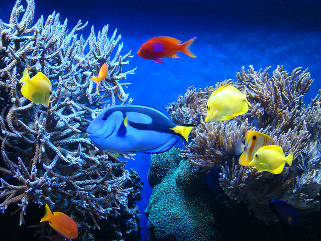 Peces de colores en acuario 1 flickr photo sharing for Peces de acuario