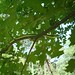 A grass snake up a tree!