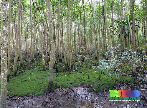 Nature Trail Using Ibeacon