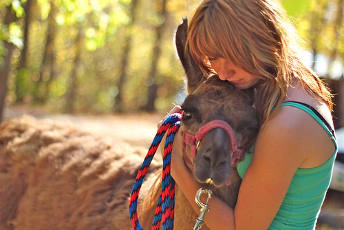 {39.52} a girl and her llama. | by abbey//