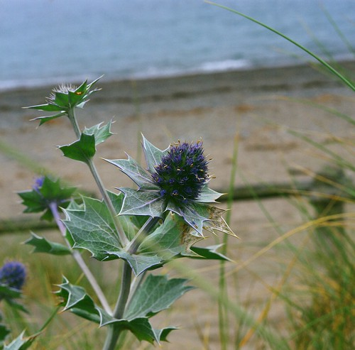Thistle | by Rob Gunby