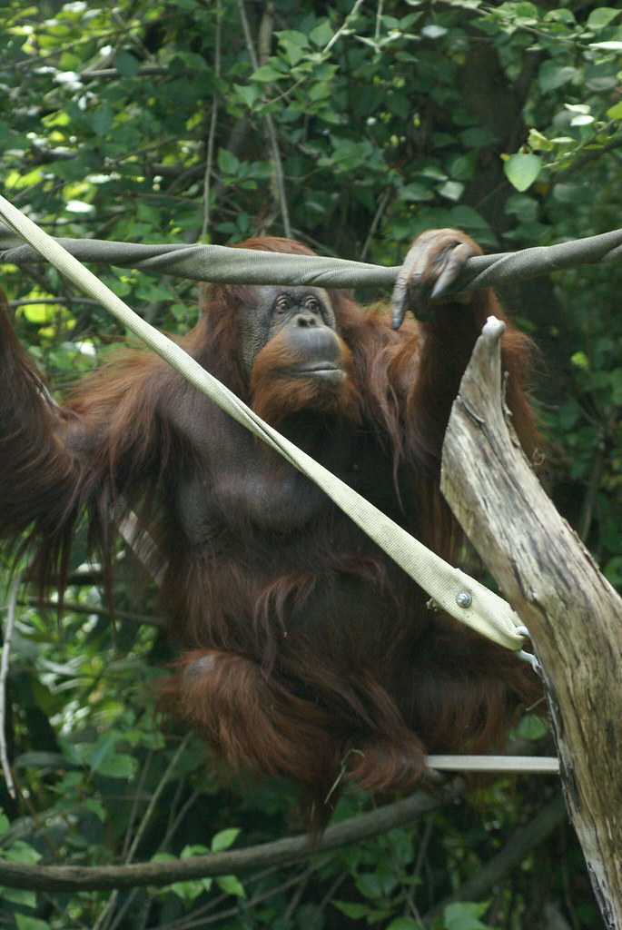 Image Result For Nests Of Bornean