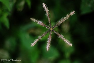 Nifty Fifty Magic... | by rajal.sanathara