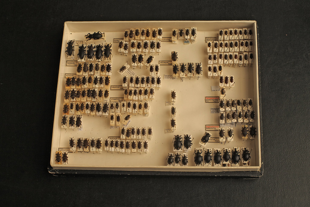 Natural History Museum Coleoptera Flickr