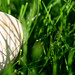 Grass with Shell