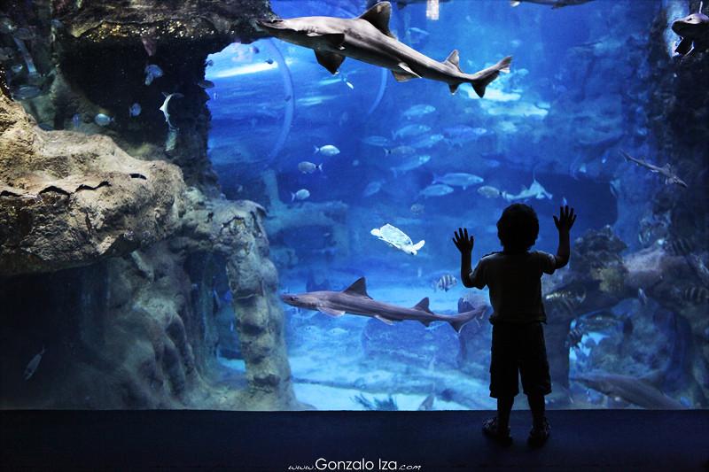 241 365 hoy he pasado por el aquarium donostiarra - Aquarium donosti precio ...