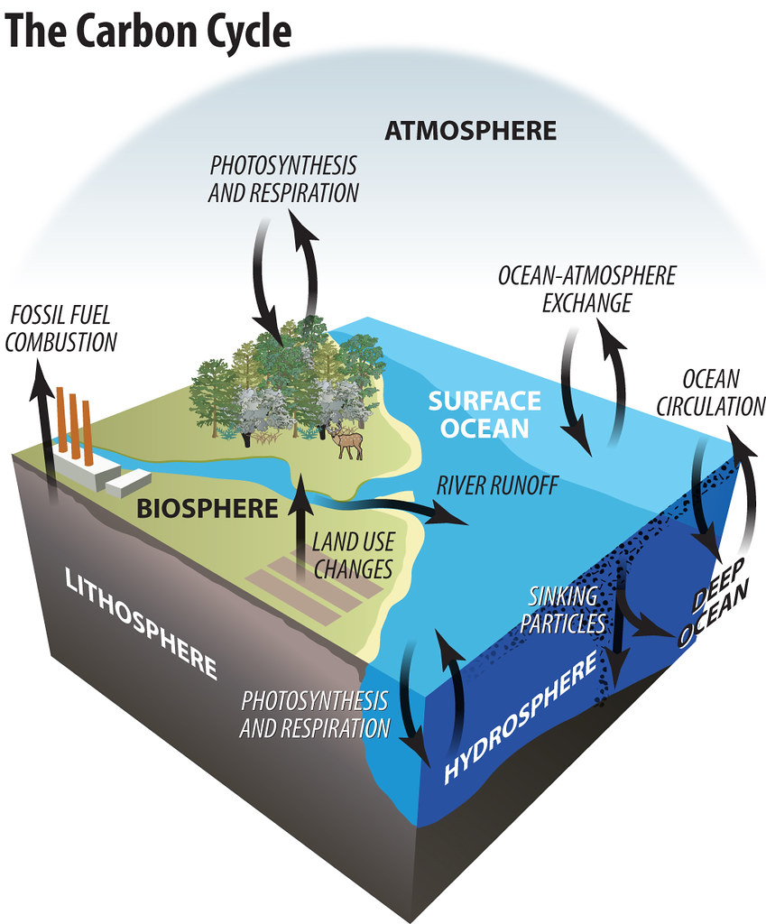The carbon cycle timmeko flickr the carbon cycle by timmeko ccuart Image collections