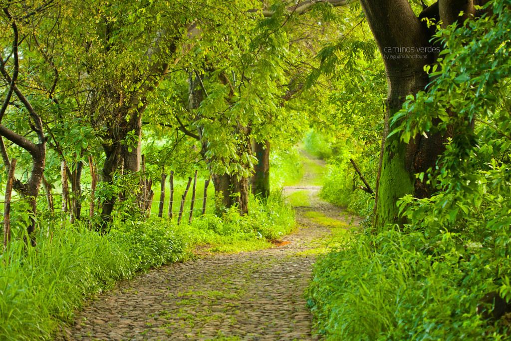 caminos verdes el color verde predomina en el paisaje