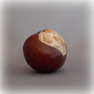 Conker - Horse Chestnut | by 3pebbles