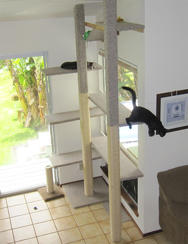Cats In The New Cat Tree Made From 1 4 Quot Plywood And 4x4
