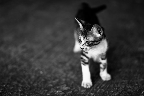 [Kitteh] | by Ciao Chow