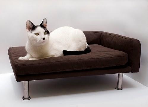 Cat Sofa | By Ernmcc Cat Sofa | By Ernmcc