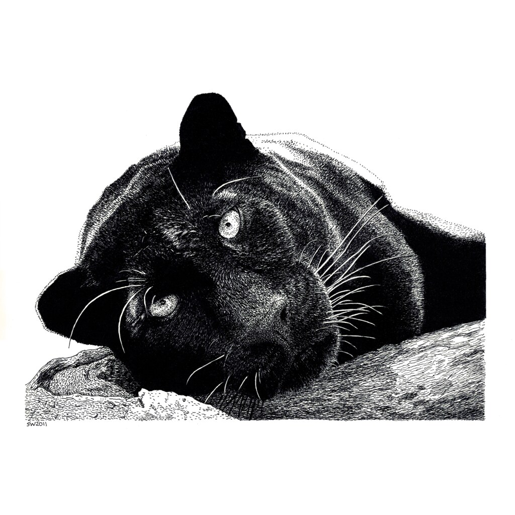 Black Panthers Panthers And Black On Pinterest: Based On This Photo By Tambako The Jaguar