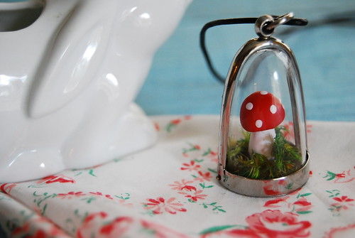 teeny terrarium | by heylucy