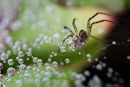 spider | by TW...