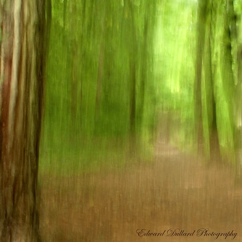 FOREST DREAMS. | by Edward Dullard Photography. Kilkenny, Ireland.