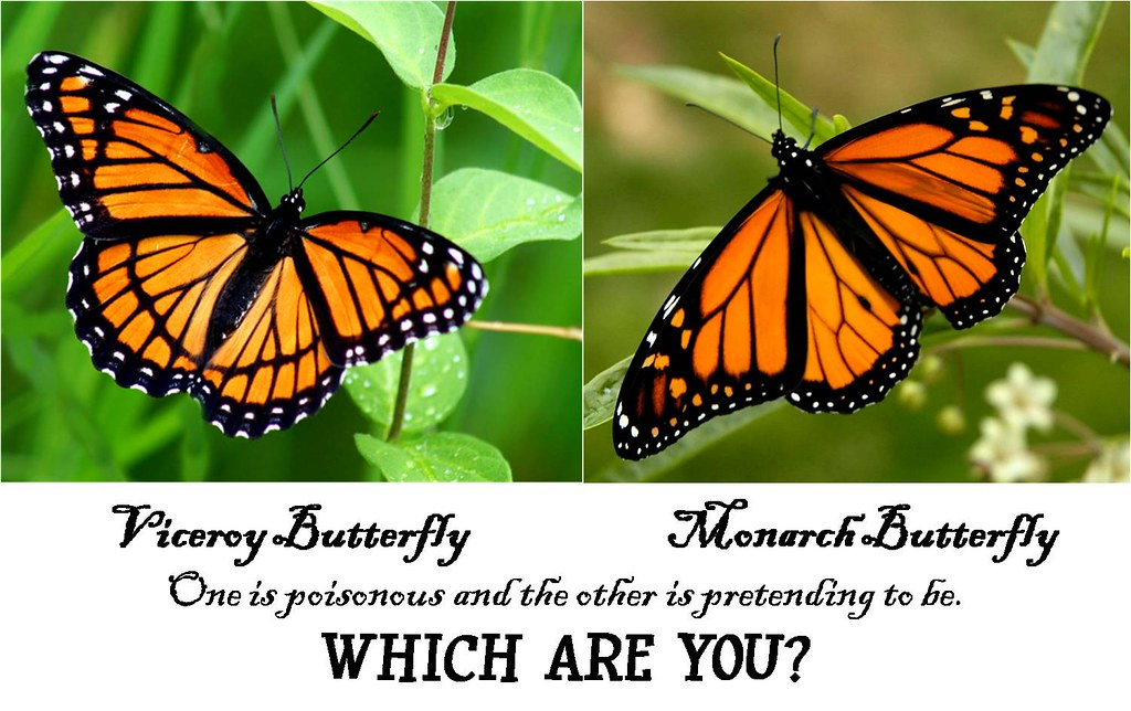 Viceroy vs Monarch whi...