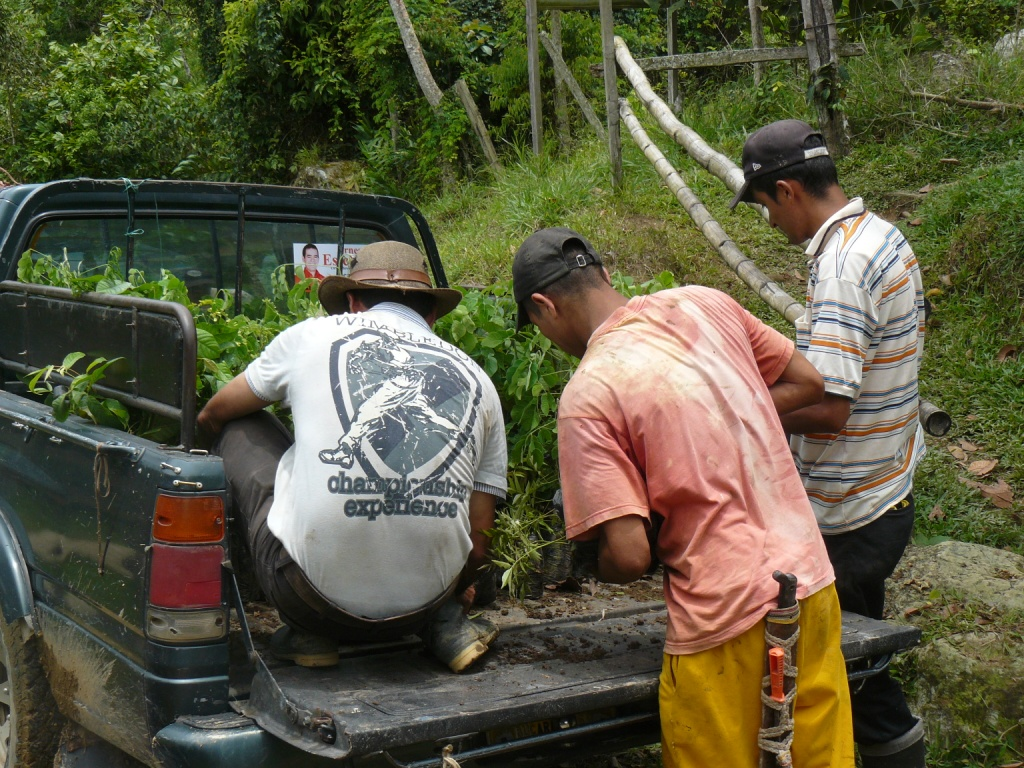 Transporte arboles vivero mata de cacao 9 rna pauxi paux for Matas de viveros