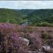 La Vinzelle - Aveyron (12)