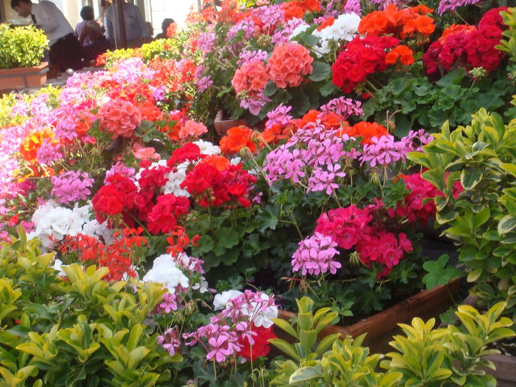 Um canteiro de flores para voc s nesta quinta flor cap for 43591 white cap terrace