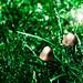Mushrooms and Fairy Dust