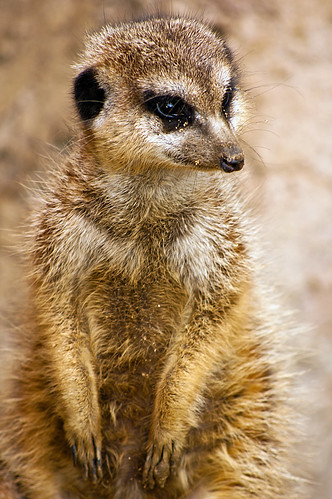Timon, where is Pumbaa? | by Fabrizio Zago - Photography and media