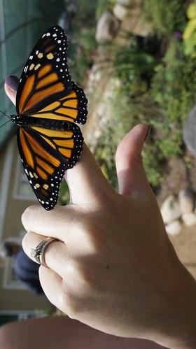 Sarett Nature Center Butterfly House
