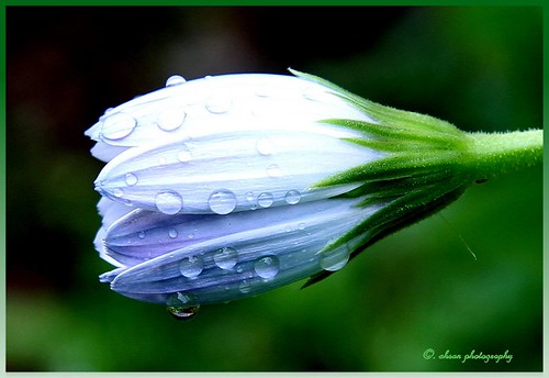 Morning Dew - V | by Ahsan. (OFF)