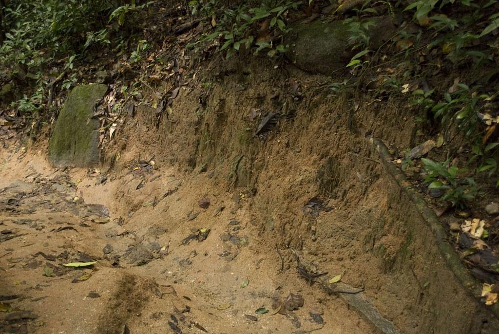 Rainforest soil exposure 110827-9987 | Thailand: Khao Chamao… | Flickr