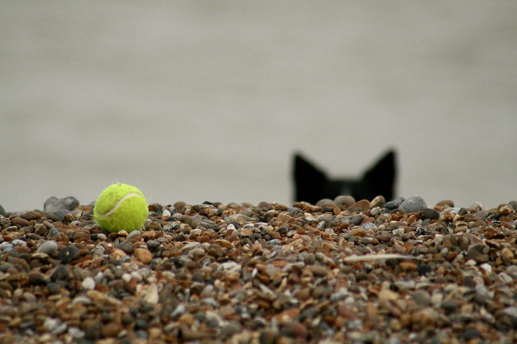 Border Collie Sea Tennis Ball Andrew Middleton Flickr