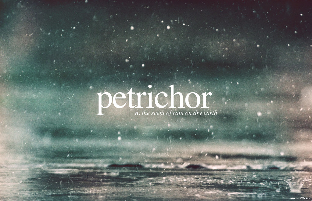 Image result for petrichor