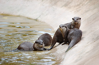 Meet the Otter Family..... | by Wire_cat