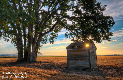 Old Shack and Oak Tree | by Gary J Weathers