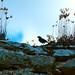 Pájaro en el castillo de Ucero - Soria