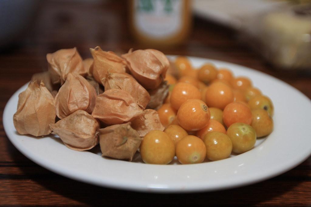 how to grow husk tomato ground cherry