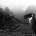 La llama de Machu Picchu