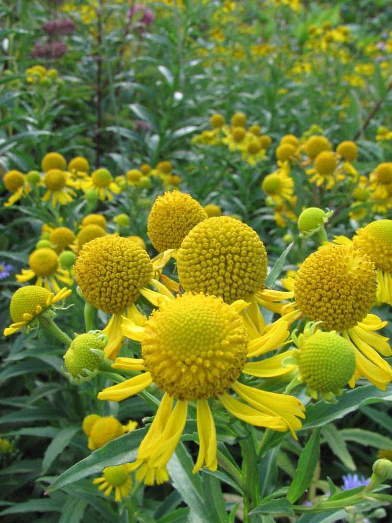 Yellow Flowers Lotte Worthington Flickr