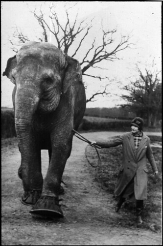 Elephant and woman | by Tyne & Wear Archives & Museums