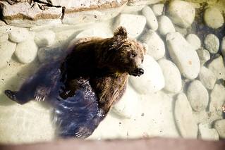 Barcelona Zoo Bear | by Mikael Colville-Andersen