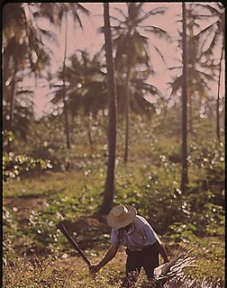 A Farmer Clears His Land With A Machete, 02/1973 | by The U.S. National Archives