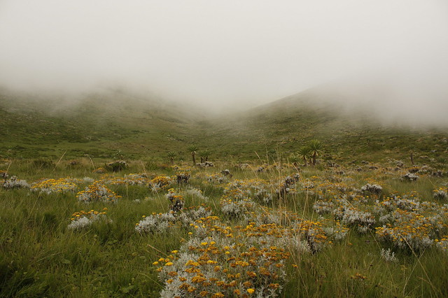 Guassa plateu in foggy weather