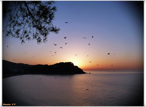 amanecer con las gaviotas---(sunrise with gulls) | by # RAMÓN Mortadelo #